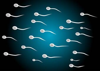 spermatozoids