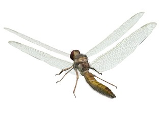 libellule the dragonfly