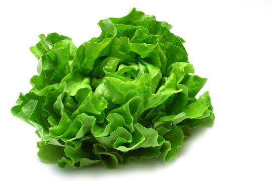 butterhead lettuce 2