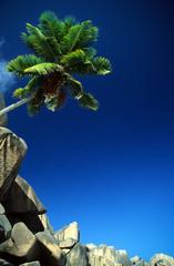 palme mit granitfelsen