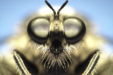 Fotobehang Macrofotografie fly eyes