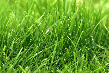 herbe / gazon vert en gros plan