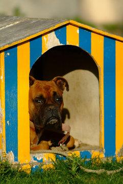 le chien dans sa niche
