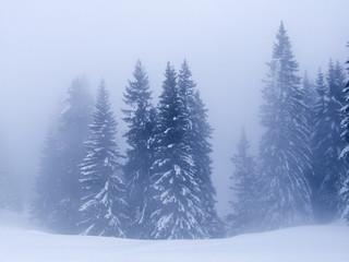 neige079