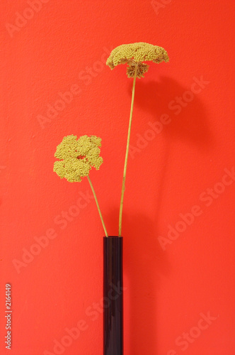 Fleur Sechee Jaune Stock Photo And Royalty Free Images On Fotolia