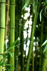 Fotobehang Bamboo bambouseraie