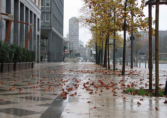 autumn in city