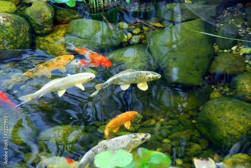 рыба для пруда рыбной ловли