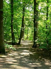 Garden Poster Road in forest forêt - forest