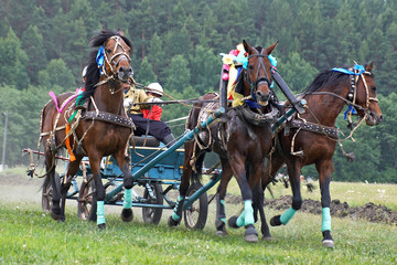 horse race. three horses  in harness