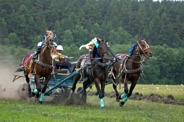 horse race. three horses  in harness.