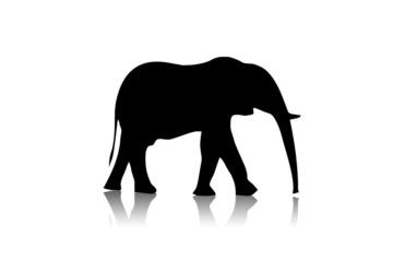 elephant black illustration