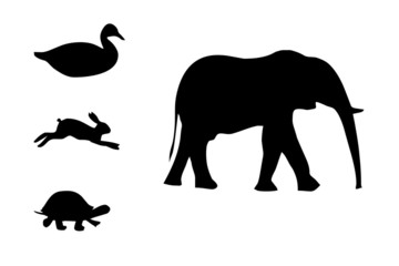duck, hare, elephant, turtle