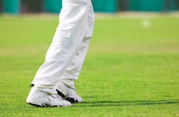 cricket #3
