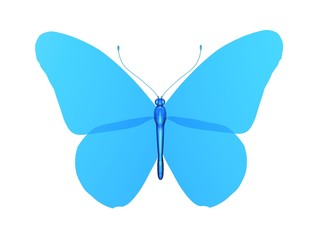 papillon blue butterfly