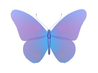 butterfly colorful papillon
