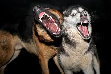 wer hat angst vor dem bösen wolf