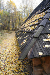house roof in a forest - autumn landscape