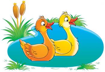 Foto op Plexiglas Rivier, meer ducks