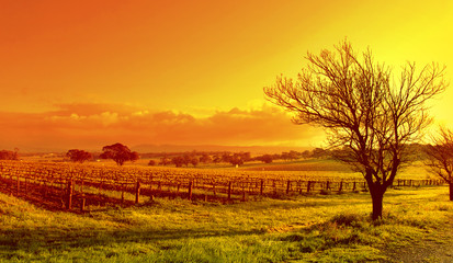 Self adhesive Wall Murals Orange Glow vineyard landscape sunset