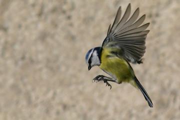 Photos illustrations et vid os de oiseau en vol - Jeux d oiseau qui vole ...