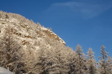 forêt de mélèzes sous la neige #2