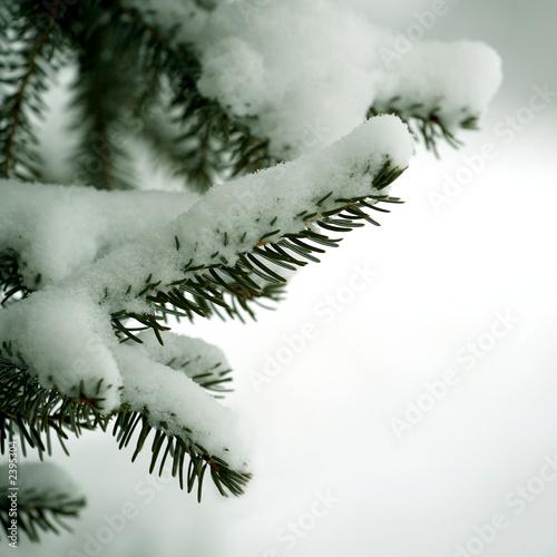branche de sapin sous la neige 1 photo libre de droits sur la banque d 39 images. Black Bedroom Furniture Sets. Home Design Ideas