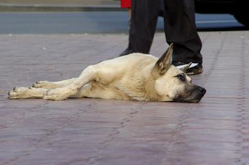 sad stray dog.