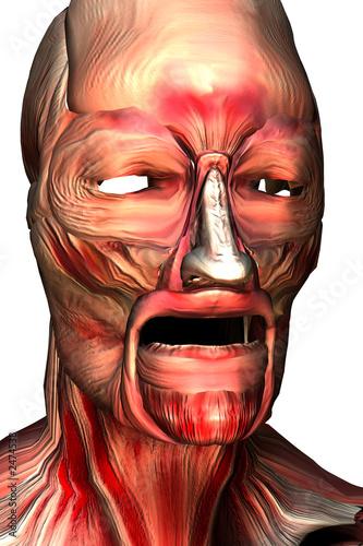 los musculos de la cara\