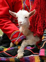 peruvian lamb