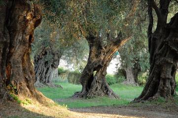 Autocollant pour porte Oliviers parc des oliviers