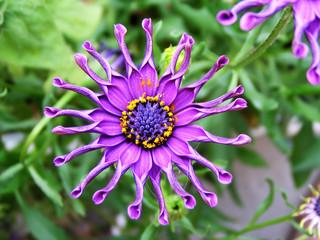 crazy flower
