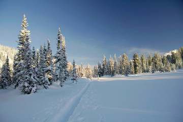 winter forest in mountains, ski-track