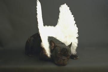 chien ange se reposant