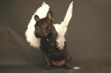 chien aux ailes deployé