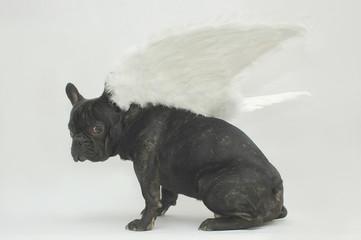 chien ange méfiant