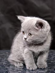kitten27