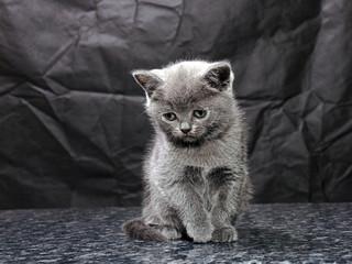 kitten04