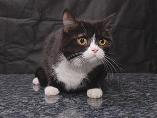 kitten52