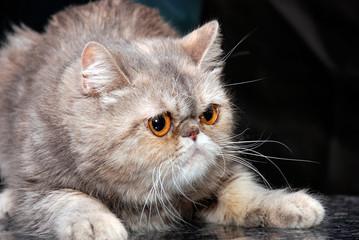 kitten41