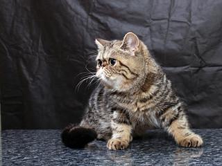 kitten71