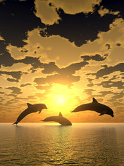 Spoed Fotobehang Dolfijnen dolphin yellow sunset