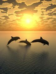 Tuinposter Dolfijnen dolphin yellow sunset_2