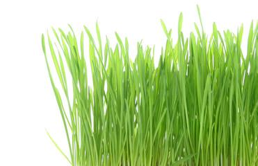 Photos illustrations et vid os de brins d herbe for Haute herbe pokemon