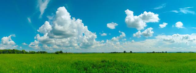 romantic summer landscape