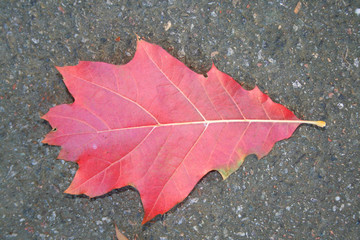 leaf at autumn