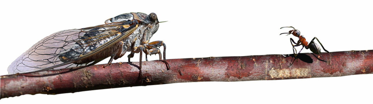 la cigale & la fourmi