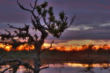sunrise on bogs