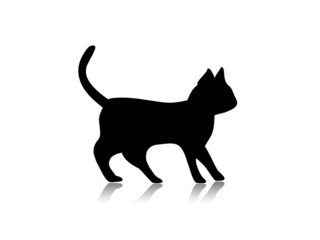black kitten silhouette