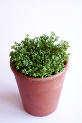 plant in pottery